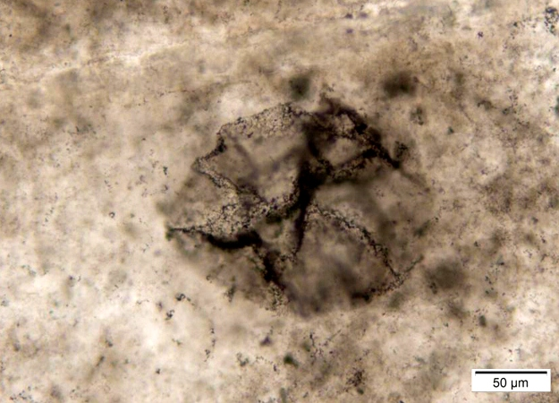 Ancient Rocks Hold Evidence for Life Before Oxygen