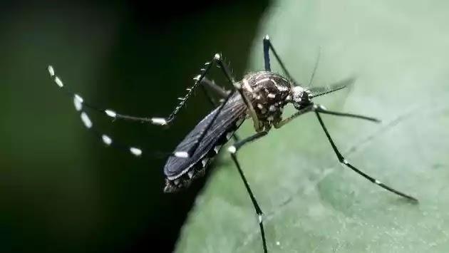 Συναγερμός: Δύο νεκροί από τον ιό του Δυτικού Νείλου στην Ελλάδα!