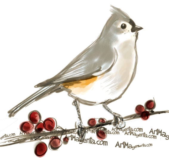 Tufted Titmouse  sketch painting. Bird art drawing by illustrator Artmagenta