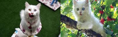kedi-yaşı