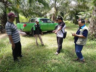 Ujicoba Supernasa Pada Tanaman Kelapa Sawit