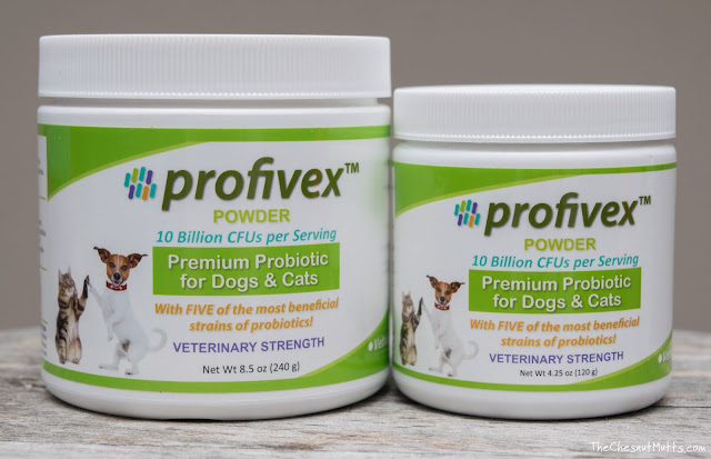 Profivex probiotic powder for pets