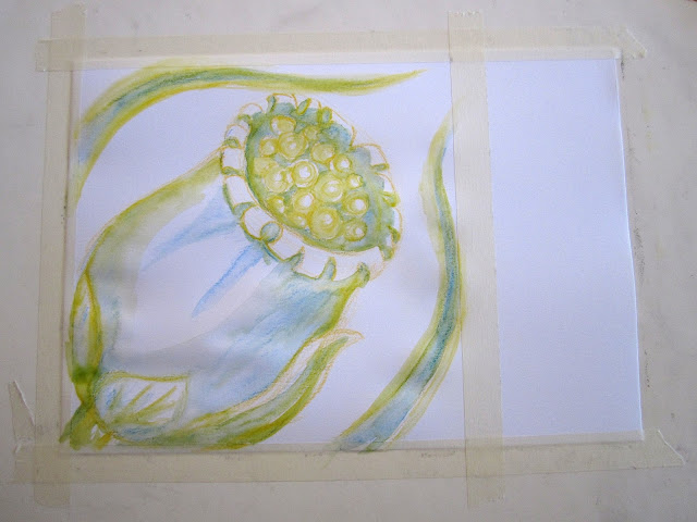 Flora watercolor paintings: Lilies and a seedpod.
