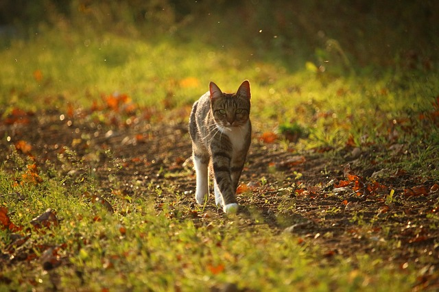 Motivational Story - Forest Life - Understanding Animal