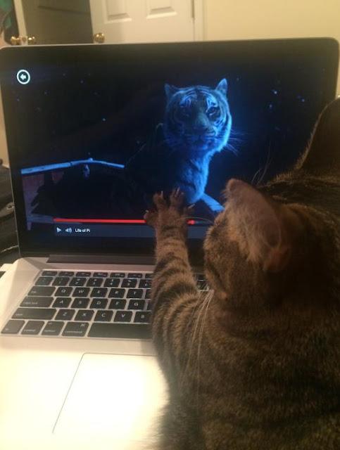 """Mèo là bọn """"coi sen chả ra kí lô gì"""""""