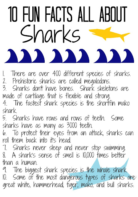 Shark Facts for Kids || The Chirping Moms