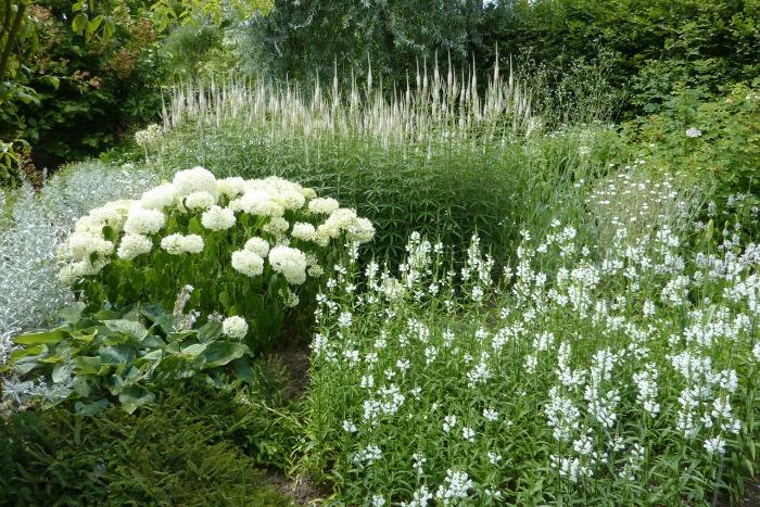 Inspiraci n plantas y flores para un jard n blanco guia for Guia de plantas de jardin