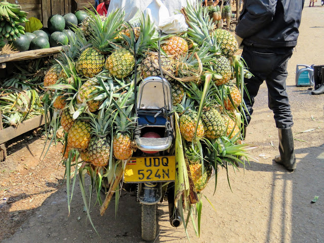 Motorcyle hauling pineapples in Uganda