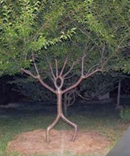 Aneh Tapi Nyata, Inilah 23 Pohon Aneh dan Unik di Berbagai Belahan Dunia