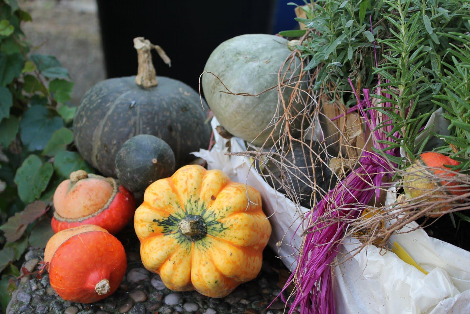 Guten Morgen Herbst Bilder Guten Morgen Bilder