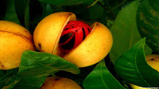 nutmeg fruit images wallpaper