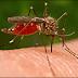 كيفية علاج عقصة البرغش - ايقاف الم وحكة لسعة البعوض بمواد طبيعية - تخفيف وعلاج لسعة الناموس للاطفال والوجه والعين بالاعشاب