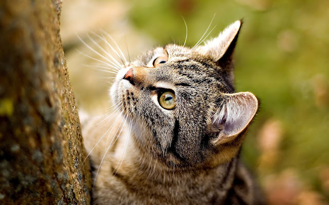 Kat die wil gaan klimmen
