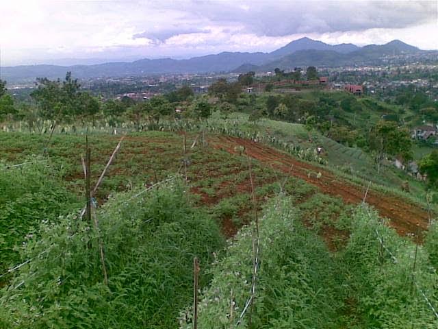 Foto%25285330%2529 Jual Tanah Di Puncak 2, Murah Jual tanah di cipanas jual tanah di puncak jual tanah di puncak2