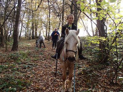 konie, kucyki, jazda konna w lesie