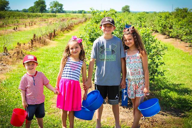 Blueberry picking Thunderbird Farm Broken Arrow, OK