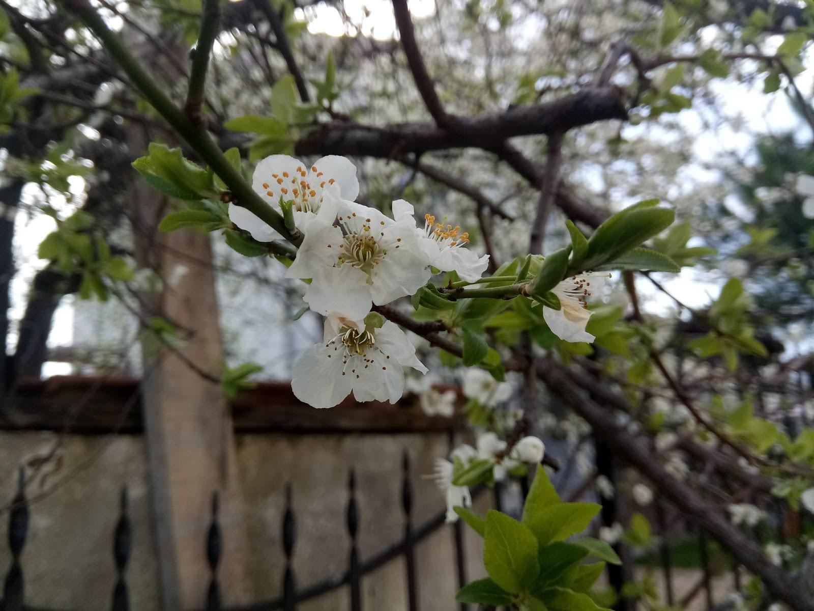 Bahar şiiri