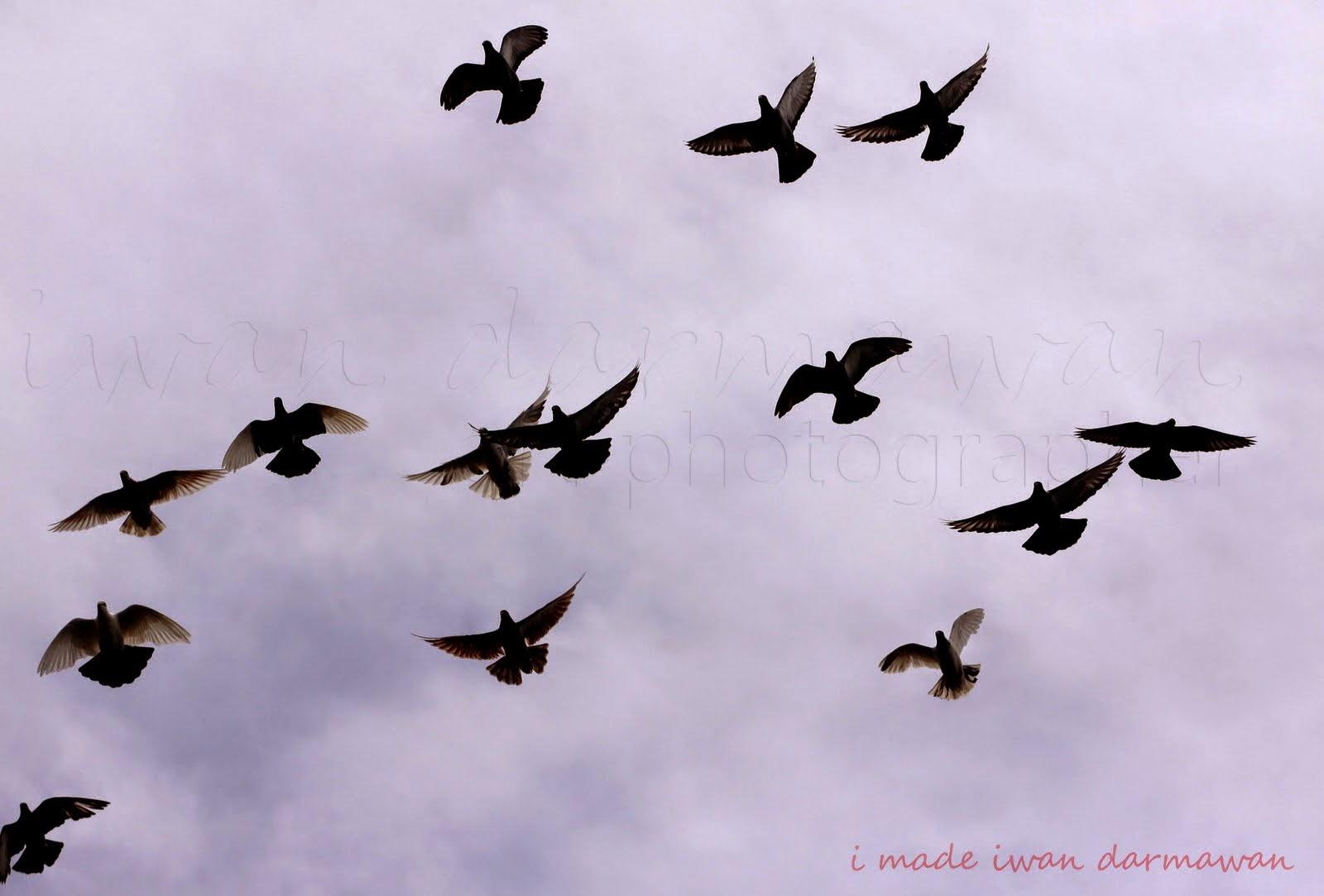 Unduh 88  Gambar Burung Terbang