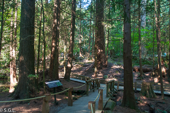 Nature's edge boardwalk Capilano Park