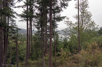 Campbell Lake from the John Tursi Trail