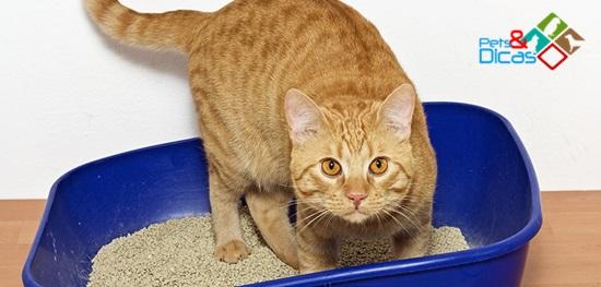 Gato usando caixa de areia