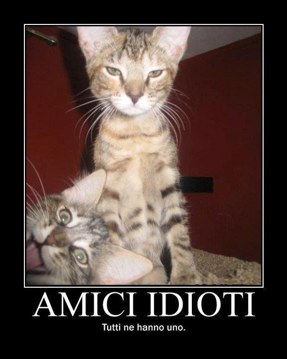Famoso I Gatti più Divertenti del Web PT45
