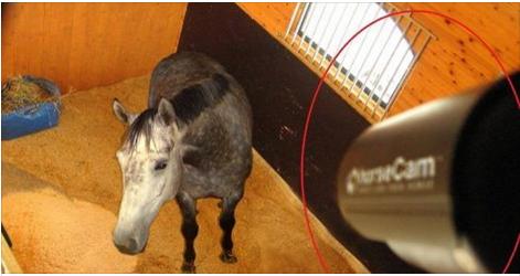 بالفيديو: وضع كاميرا لمراقبة حصانه في الليل .. شاهدوا المفاجأة!