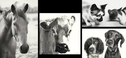 00-Dogs-Cats-Horses-and-Cows-Pencil-Drawings-www-designstack-co