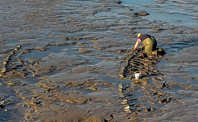 Photo of a man checking his crab pots at low tide in Maryport Basin