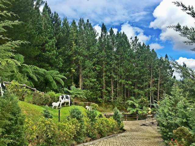 Dahilayan Forest Park Resort is one of the things to do in Bukidnon