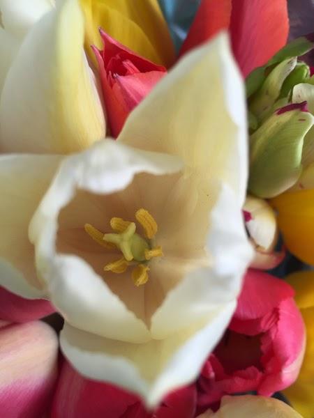 bouquet de fleurs avec des tulipes