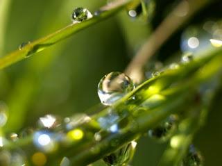 Beautiful Drops Wallpapers