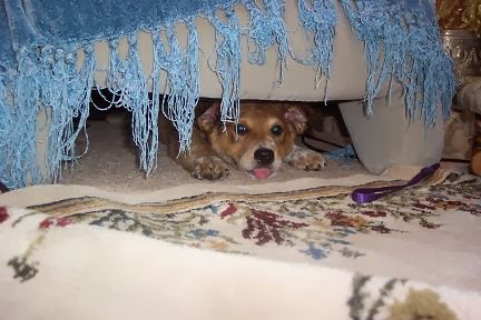 Baby Brisbane hiding