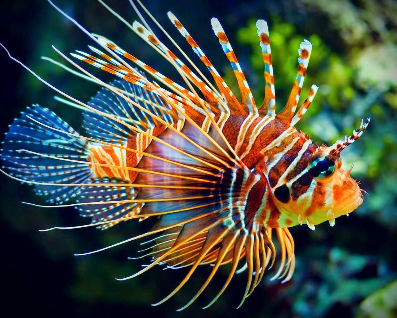 Gambar Beragam Jenis Ikan Mulai Dari Paus Sampai Cupang Nettik