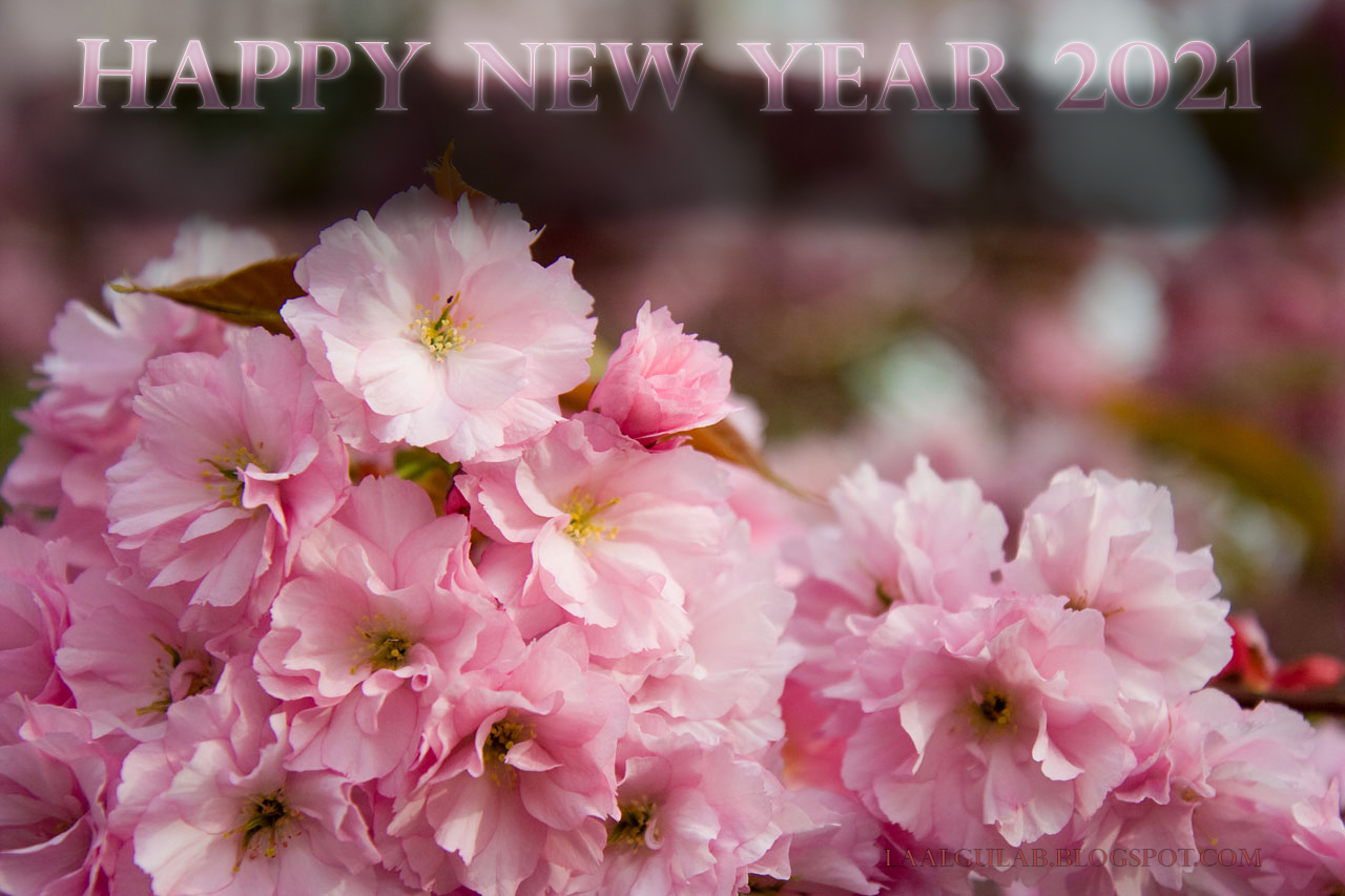 Happy New Year 2021 Wallpapers HD Images 2021 Happy New ...