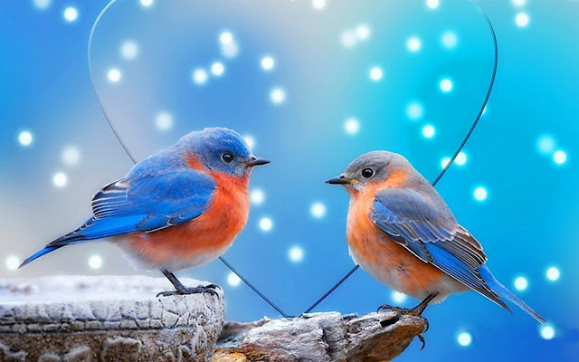 Cute Funny Wallpaper Images Latest Small Birds Wallpapers Various Bird Species