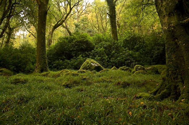 мох на камнях и деревьях