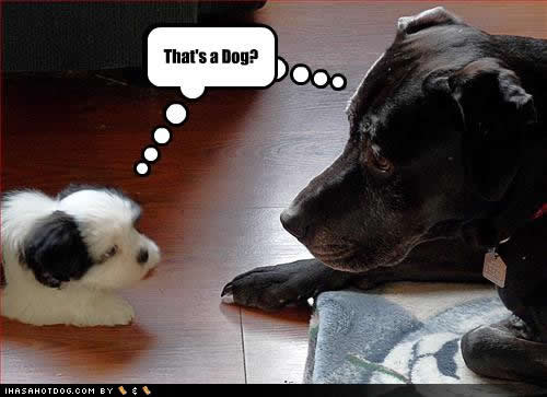 The teach Zone: Funny dog pictures with captions and funny ...