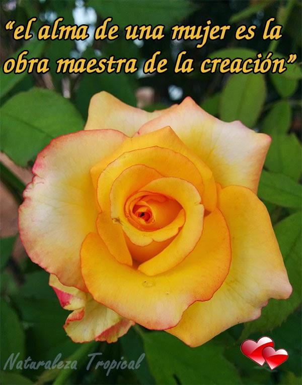 El alma de una mujer es la obra maestra de la creación.Flor Rosa