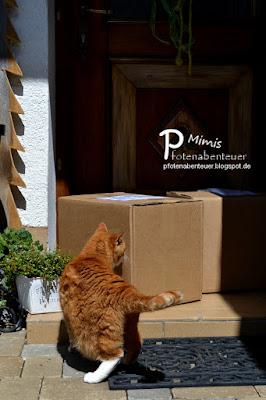 Katze Mimi bekommt zwei große Pakete zugeschickt
