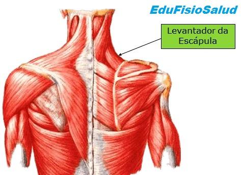 Fisioterapia - Pilates - Reeducacion Postural - Auriculoterapia ...