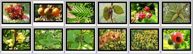 ¿Sabes de plantas? Necesito tu ayuda