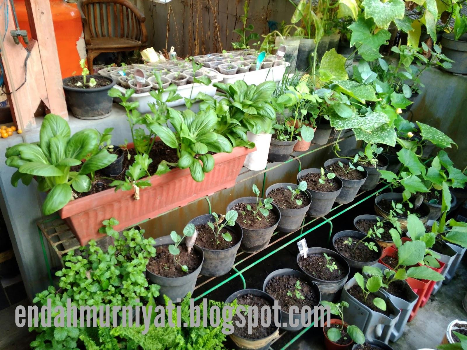 Endah murniyati 39 s journey bligo invasion for Terrace garden plants