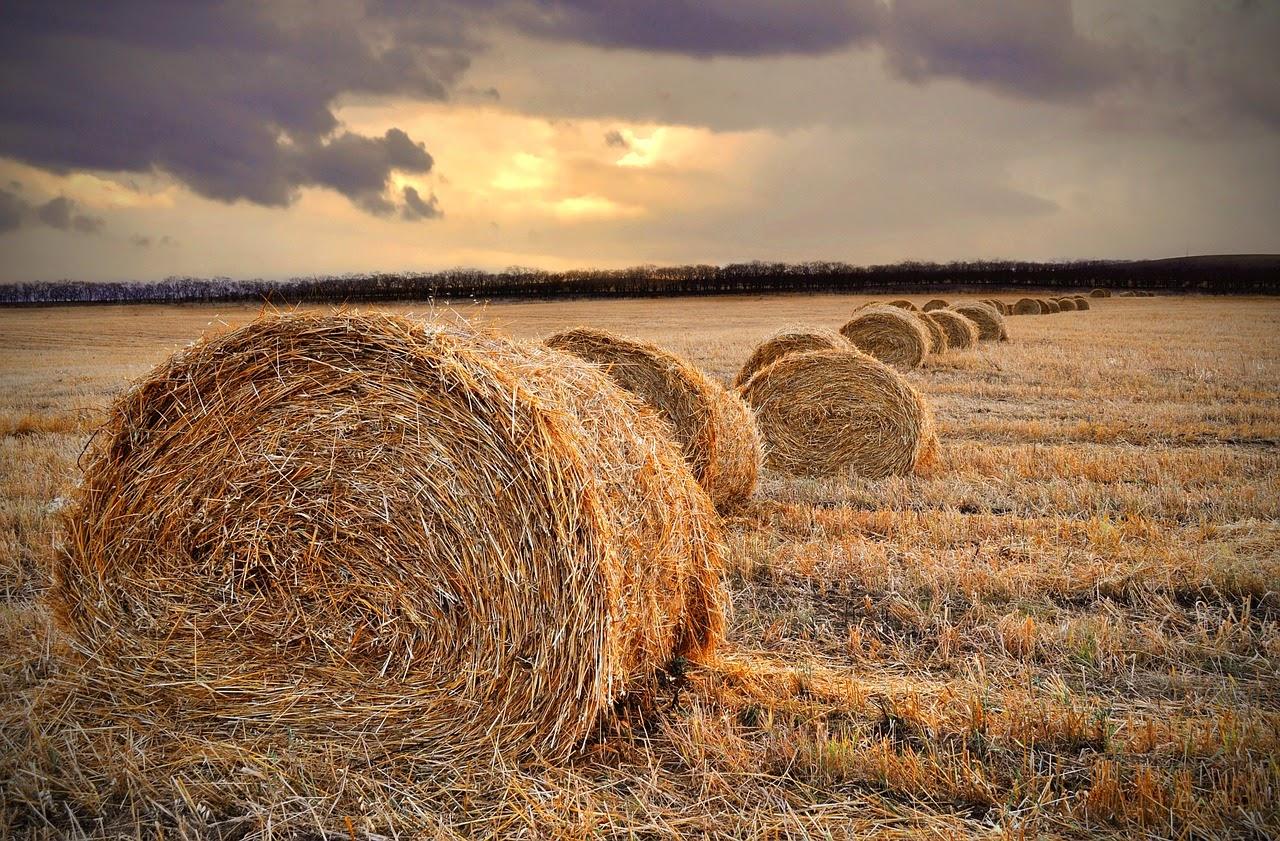 Tani kredyt na ziemię rolną. Raty roczne, półroczne i miesięczne.