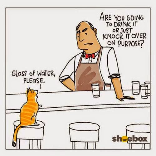 Funny Cat Walks Into A Bar Cartoon Joke Picture