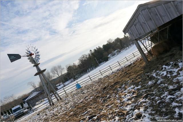 Tendercrop Farm, Newbury