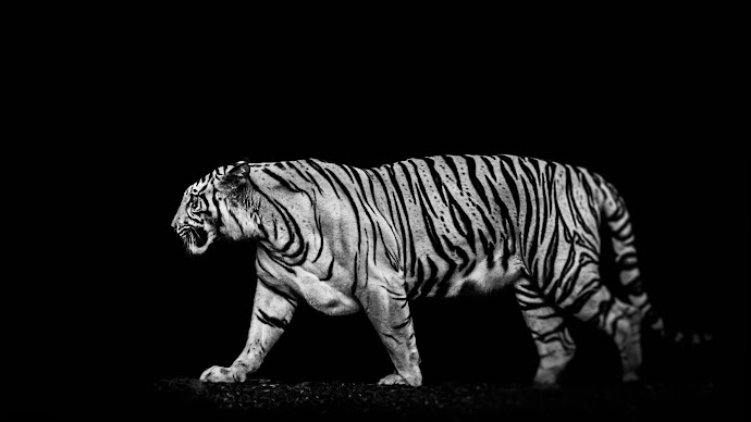 Wallpaper: Tiger out of the dark