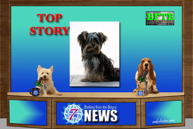 BFTB NETWoof News with Yorkie story and two dogs reporting