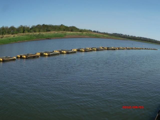 Cria peixe tilapicultura produ o de til pias em tanques for Tanques para cria de tilapia