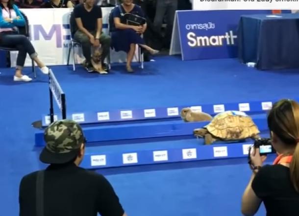 Lomba Lari Kura-Kura dan Kelinci, Siapakah Pemenangnya?